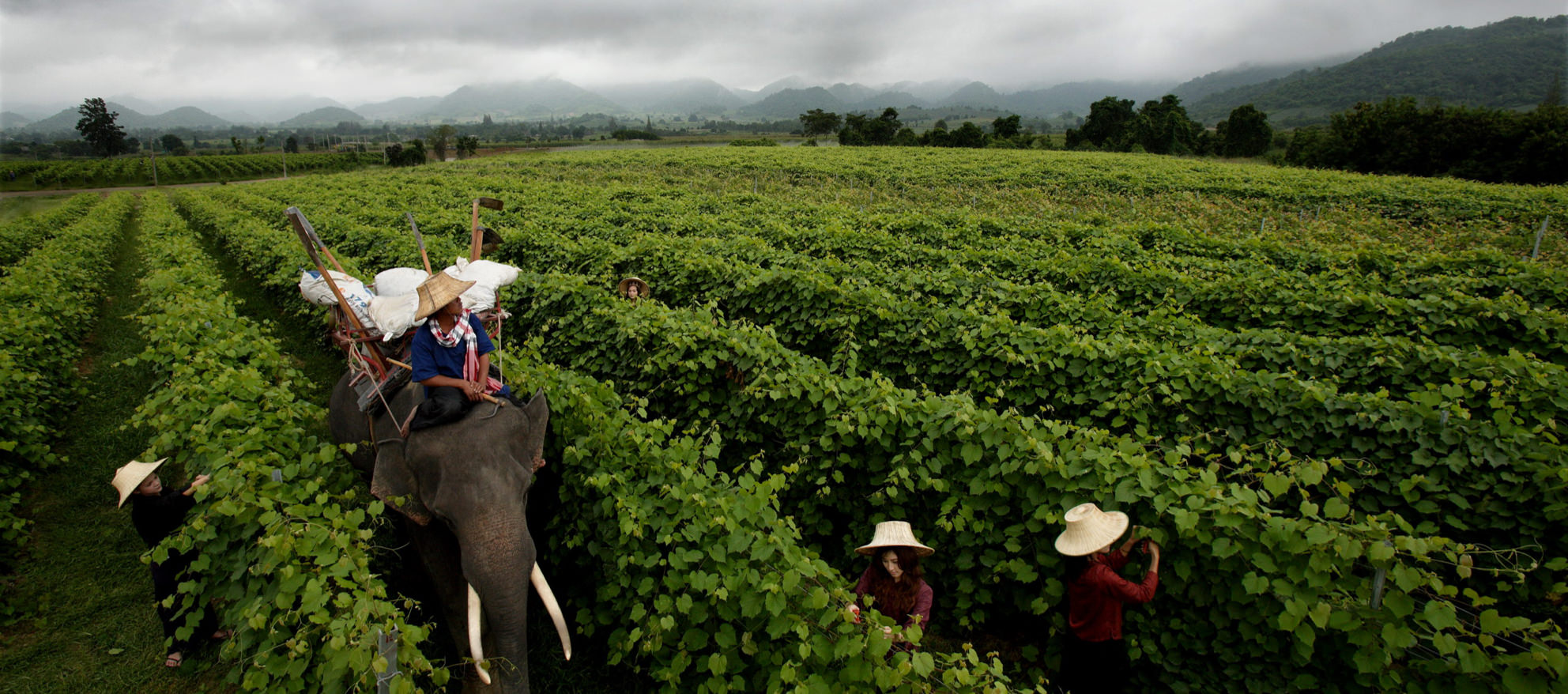 explore-huahin-hill-vineyard-1