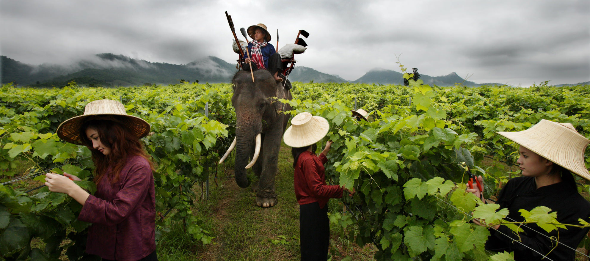 explore-huahin-hill-vineyard-2